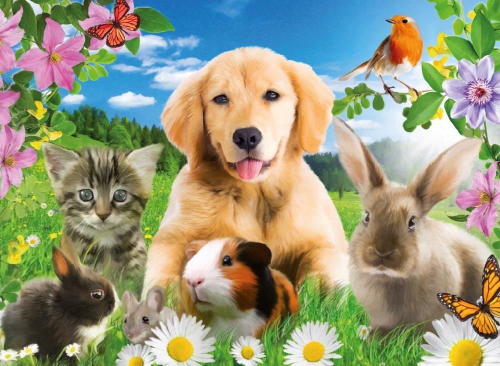 Красота – страшная сила, особенно если это касается домашних животных